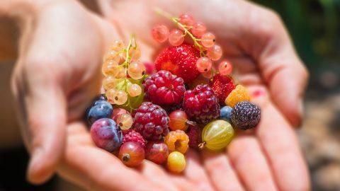 Giúp bữa sáng giảm cân của mình trở nên đa dạng và ngon miệng hơn với các loại quả mọng nhé