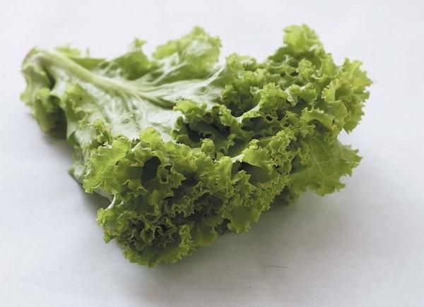 Rau diếp xoăn không chỉ ngon miệng mà còn là một trong các loại rau giảm mỡ bụng cực kỳ hiệu quả