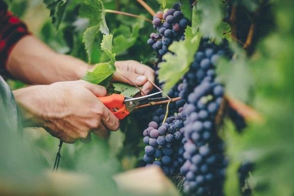 Top các loại rau quả giúp giảm cân