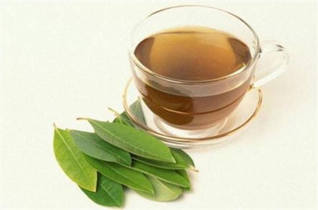 Lá vối là loại lá uống giảm cân hiệu quả, tốt cho sức khỏe