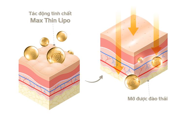 Cơ chế đốt mỡ sinh học của Max Thin Lipo phân tách các tế bào mỡ từ bên trong rồi đào thải ra ngoài cơ thể theo cách tự nhiên