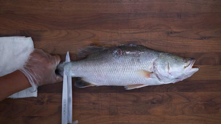 Cá chẽm nằm trong top hải sản giúp cho giảm cân