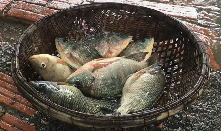 Thật bất ngờ khi cá rô phi cũng lọt top các thực phẩm giảm cân hiệu quả
