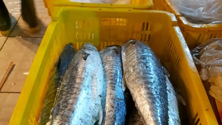 Cá thu là một trong những thực phẩm giảm cân hiệu quả