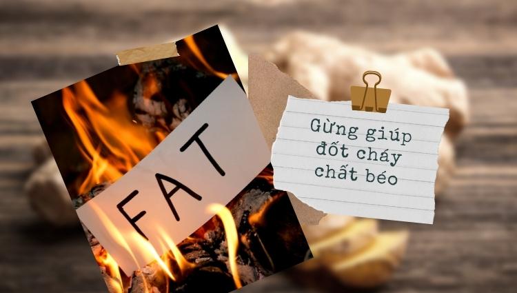 Gừng giúp đốt cháy chất béo