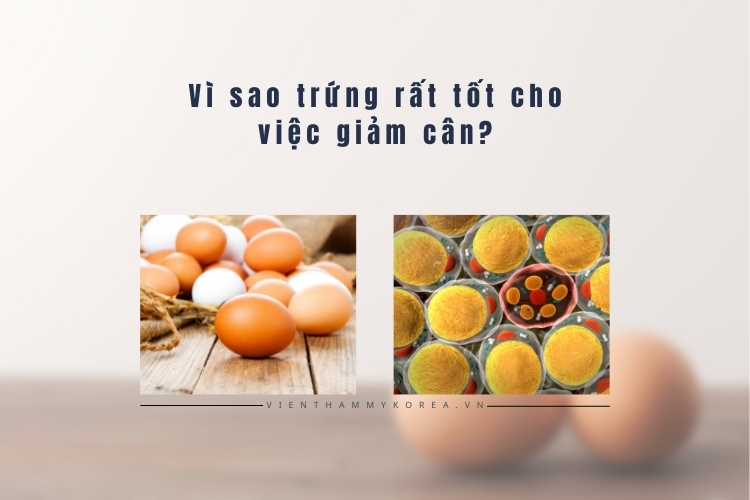 Trong trứng rất giàu thành phần dinh dưỡng tốt cho cơ thể nhưng lại không gây béo