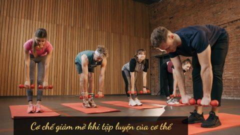 Cơ chế giảm mỡ khi tập luyện của cơ thể